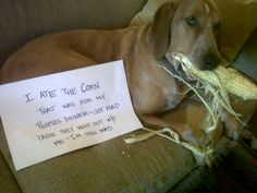 I ate the corn that was for my peoples' dinner- got mad 'cause they went out w/o me - I'm still mad