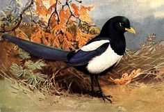 Your Animal Spirit for Today 7/24 Ancient culture associate Magpies with excellent fortune—so it looks like you've got something really terrific coming into your life today. However, you may need to search a little to understand the true gift that's being presented. Pay attention to omens, messages, the clouds, feathers, bird song—your fortune is hidden in those subtle messages. Opportunity is knocking at your door—will you answer?