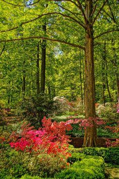 Azalea gardens at the National Arboretum.