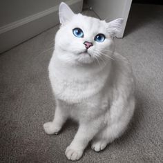 And oh my goodness, just behold this gorgeous cat with perfect cat-eye makeup. | 21 Stunning Cats Who Have Prettier Eyes Than You