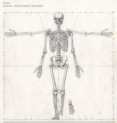 esqueleto.jpeg (1433×1516)