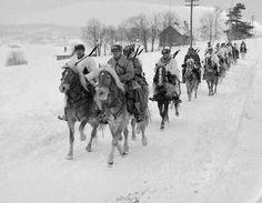 Finn horses at war Troops, Soldiers, Horse Breeds, Warfare, World War, Winter, Equestrian, Camel, Horses