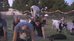 A goat yoga class was held on Tuesday in Gilbert. (Source: KPHO/KTVK)