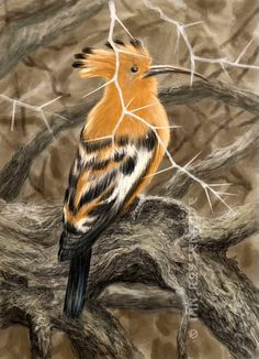 African Hoopoe bird - one hour sketch on my iPad Pro with an iPencil