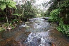 Rainforest in Hinterland, Gold Coast, Australia