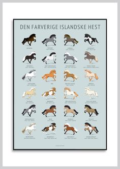Horse Illustration, Horse Posters, Icelandic Horse, Wall Decor Pictures, Horse Quotes, Iceland Travel, Palomino, Horse Girl, Horse Breeds