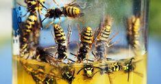 Pest Control Measures For Effective Flea Prevention Bug Control, Pest Control, Step Function, Borax Powder, Enzyme Cleaner, Flea Spray, Pest Management, Organic Matter, Pet Health