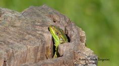 Nature -  Photos by Cassio Zangarini