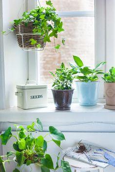 Kodin1, Elämäni koti, 7 vinkkiä: Kodin viherkasvien keväthuolto #elamanikoti
