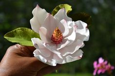 "Magnolia... made with ""gum paste"" to decorate a cake! I would love to take this class!!"
