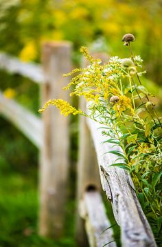 9 Swift Cool Tips: Front Yard Fence Laws Fence Ideas Bamboo.Front Yard Fence Bylaws Toronto Garden Fence Using Pallets.City Of Sacramento Front Yard Fence. Country Charm, Country Life, Country Living, Country Style, French Country, Esprit Country, Cerca Natural, Country Fences, Rustic Fence