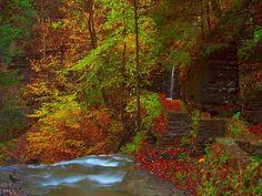 autumn scenes | Autumn Scene.jpg
