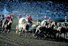 """There's the Horn: And they're off!"" That's what you'll hear if you attend a Chuckwagon race during the Calgary Stampede. This iconic event has been a fan favourite since 1923 when it was first introduced."