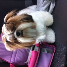 Daisy - Uma menina muito sapeca e carinhosa.