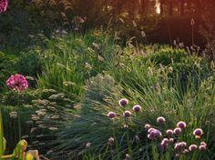 Combinatie met grassen. o.a.: sanguisorba officinalis tanna grassen - www.zomerstraat.be