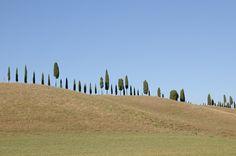 Woran denken Sie bei der italienischen Toscana? An leckeres Essen, an guten Wein und wahrscheinlich nicht zuletzt an die typischen Zypressenbäume, die das Landschaftsbild prägen. Diese Fototapete zeigt alleeartig wachsende Zypressen auf einem sanften Hügel. Festgehalten wurde das Motiv von Reiner Blankenhorn. #urlaubsfeeling