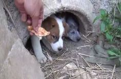 This brings tears to my eyes! A Mother Manages To Help Save Her Puppies After Passing Away.