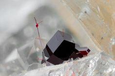Cuprite on fluorite. Clara Mine, Oberwolfach, Baden Württemberg, Germany (Germany) - 1.6 mm. Photo & Fund: Eddy Van Der Meersche, Collection: Dirk Van Brande