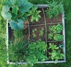 Dans un potager carré on peut faire pousser : de la ciboulette, du persil commun, du basilic, de la laitue, des feuilles de chêne, des radis, des tomates cerises et des capucines!