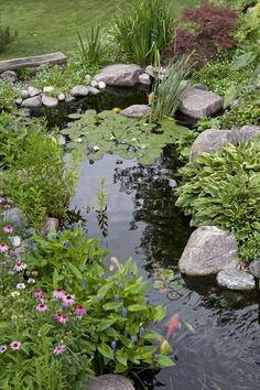 Plants Naturalize the Edges of a Pond