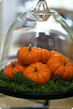 decorating with pumpkins and a cake stand