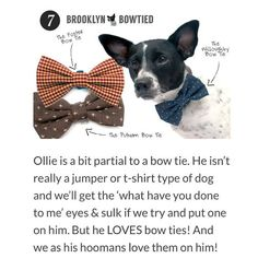 "A big THANK YOU to @twospoiltsausages for including our bow ties in their ""10 Dog Products We Love! "" post!  Love your site!  #dogsinbowties #bowtie #dogbowtie #dapperdog #brooklyn #handmade #shopsmall #brooklynbowtied #madeinbrooklyn #rescuedog #adoptdontshop #etsy #dogsofbrooklyn #dogsofinstagram #etsygifts #barkbox #calledtobecreative #marthastewartpets #ohwowyes #dogsinbetween #ruffpost #pawpack #pawstruck #barkpack #bestwoof #dogsofinstaworld #houndsbazaar by brooklynbowtied"