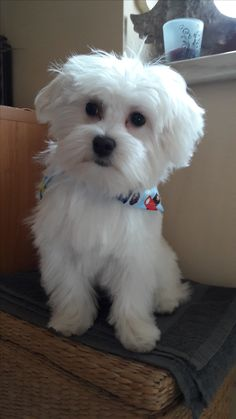 Hunde Foto: Silvia und Charly - Mein süßer bub Hier Dein Bild hochladen: http://ichliebehunde.com/hund-des-tages  #hund #hunde #hundebild #hundebilder #dog #dogs #dogfun  #dogpic #dogpictures