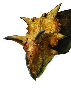 Xenoceratops (WIP, fragment) by ~Olorotitan