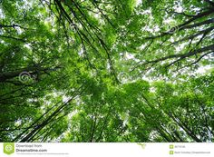 Green Trees Canopy Royalty Free Stock Images - Image: 28770139