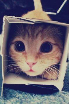 """hehehe im ina box"" : D"