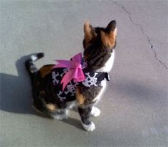 MIMI'S PET HARNESSES - CAT HARNESS - Mentone, CA