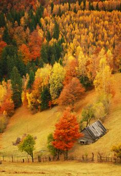 remote cabin nestled in amongst beautiful Fall foliage Beautiful World, Beautiful Places, Beautiful Pictures, Beautiful Scenery, Belle Image Nature, Seasons Of The Year, All Nature, Autumn Nature, Autumn Forest