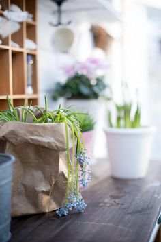 Bratte bakka og grøne lier: Drivhus