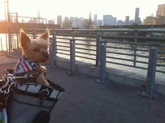 Dogs of New York: Beyond Breed