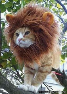 For just a moment I am going to be one of those people. My ginger cat would look just plain amazing in this. I always wanted a lion or tiger... ;D