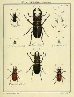 scientificillustration:    n16_w1150 by BioDivLibrary on Flickr.