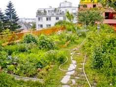 Graz is the latest European city to provide funding to implement green infrastructure such as green roofs, green walls and communal gardens. Green Roof Benefits, Landscape Architecture, Climate Change, Rooftop, Vineyard, Vienna, City, Plants, Pictures