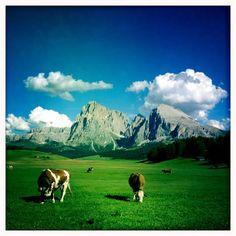 Alpe di Siusi / Seiser Alm in Castelrotto, Trentino - Alto Adige