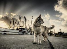 Shore Cat