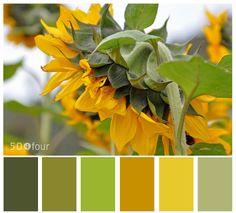 16 Ideas Kitchen Decor Themes Sunflowers Color Palettes For 2019 Kitchen Colour Schemes, Kitchen Paint Colors, Blue Color Schemes, Color Combos, Pantone, Sunflower Themed Kitchen, Soothing Paint Colors, Sunflower Colors, Rustic Laundry Rooms