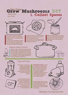 How to collect spores and grow your own mushrooms!