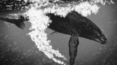 Page 8 / Underwater Pictures / Digital Art Gallery