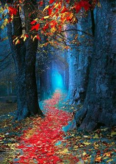 Magical Autumn leaf covered forest path leading to a fairyland wedding!