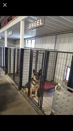 Custom Dog Kennel, Dog Kennel Designs, Kennel Ideas, Shelter Dogs, Animal Shelter, Rescue Dogs, Puppy Kennel, Pet Kennels, Building A Dog Kennel