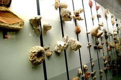 Timeline Wall of Fossils    From the Naturhistorisches Museum in Bern, Switzerland