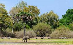 the Selous, Tanzania