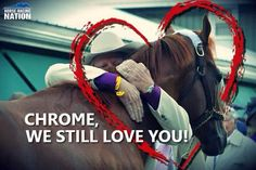 California Chrome Like us on facebook : https://www.facebook.com/pages/Holtz-Saddle-Company/696290627050728