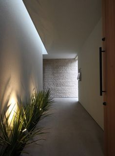 Plant grove along path to front door Dream Home Design, Home Interior Design, Exterior Design, House Design, Corridor Design, Modern Villa Design, Narrow House, House Entrance, Facade House