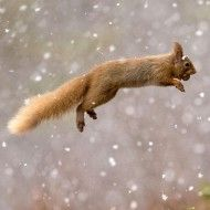 The Sims 4 Cheats Full Updated List For Pc Xbox Ps4 Red Squirrel Squirrel Animals