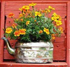 #pots #planters #pottery #containers  Now where was that old tea kettle? Cute!